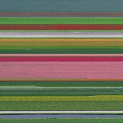 Bernhard Lang, 'Aerial Views, Tulip Fields 14', 2016