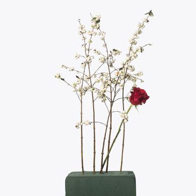 Inez & Vinoodh, '5 White Berries, 1 Red Rose', 2013