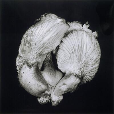 Dale M. Reid, 'Oyster Mushroom no.44', 2017