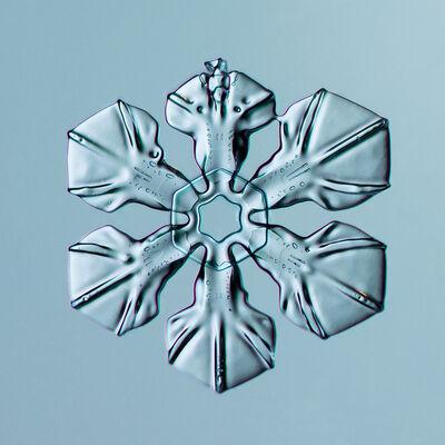 Douglas Levere, 'Snowflake 2014.02.16.024 ', 2014