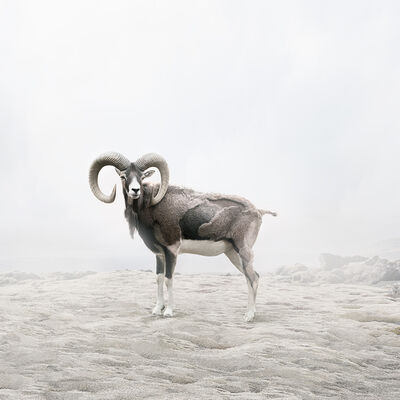 Alice Zilberberg, 'Reflecting Ram', 2019