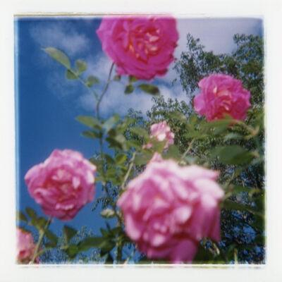 David Rasmus, 'Flower 208-10', 1997