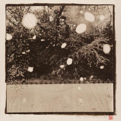 Toshio Enomoto, 'Petals Faling, Moat of Hirosaki Castle 1, Aomori', 2014