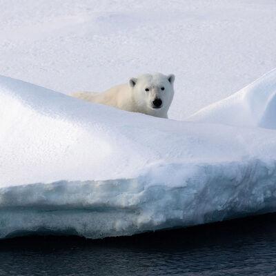 Stephen King 金昌民, 'Polar Sentry', 2016