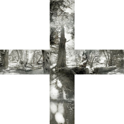 Tama Hochbaum, 'Cypress / Sea Ranch', 2017
