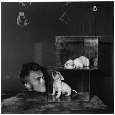 Roger Ballen, 'Puppies in fishtanks', 2000