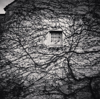 Michael Kenna, 'WINDOW AND VINES, ABBAYE DE FONTENAY, BOURGOGNE, FRANCE, 2013', 2013