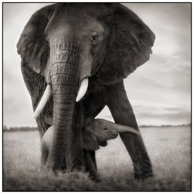 Nick Brandt, 'Elephant Mother & Baby Holding Leg, Serengeti', 2002