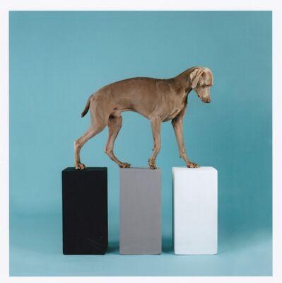 William Wegman, 'Dog with Three Cubes, 2016 - Signed digital print', 2016