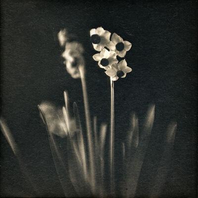 Takashi Arai, '2013.02.01 Suisen (Narcissus)', 2013