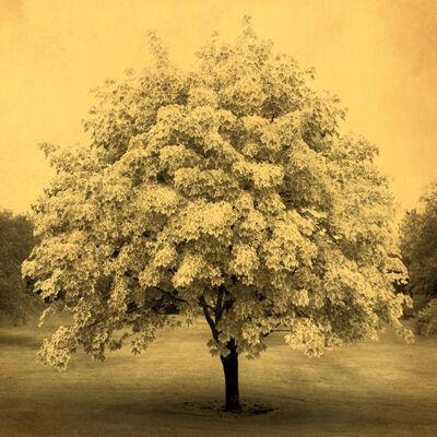 Joyce Tenneson, 'Blooming Tree', 2011