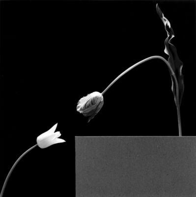 Robert Mapplethorpe, 'Two Tulips', 1984