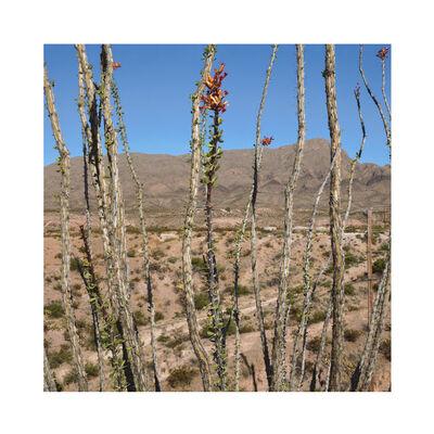 Daniel Mirer, 'Cholula Cactus Landscape, New Mexico', 2017