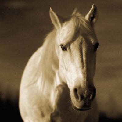 Michael Eastman, 'Horse 22', 2000