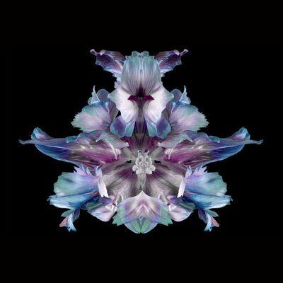 Jeff Robb, 'Flower', 2019