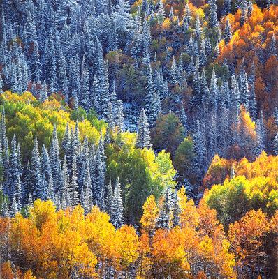 Christopher Burkett, 'Snowy Mountainside Aspens and Sunlight, Colorado', n.d.