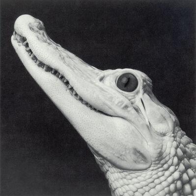 """Michael O'Neill, 'White Alligator, """"Bourée""""', 1991"""