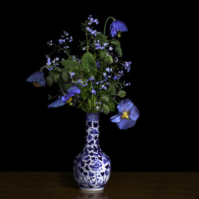 T.M. Glass, 'Blue Poppy in a Blue and White Chinese Vase', 2018