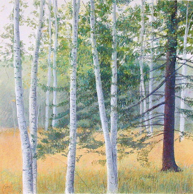 Elissa Gore, 'Birch Field 2', 2001