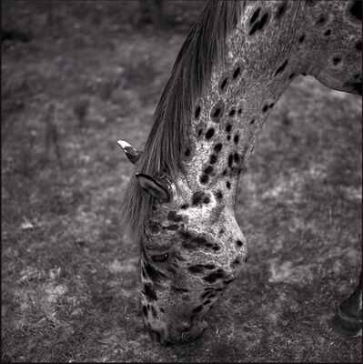 Keith Carter, 'Appaloosa', 1997