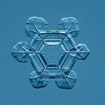 Douglas Levere, 'Snowflake 2015.02.25.007', 2015