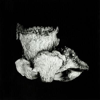 Dale M. Reid, 'Oyster Mushroom no.48', 2019