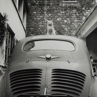 Agnès Varda, 'Chat dans ma cours', 1956