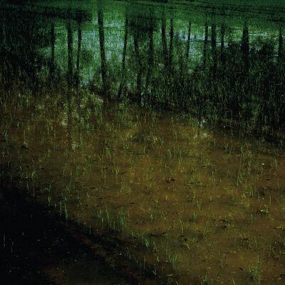 Helen Sear, 'Rice Field II', 2015