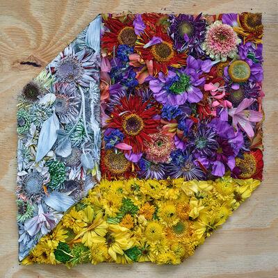 Abelardo Morell, 'Flowers for Lisa #38', 2017