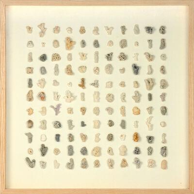 herman de vries, 'coll. of corals, seychellen', 2015