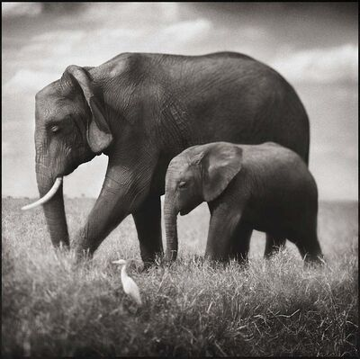 Nick Brandt, 'Elephant Mother & Baby Walking in Tandem, Maasai Mara', 2003
