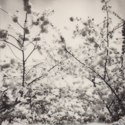 Julia Beyer, 'Cherry Blossom Skies IV', 2015