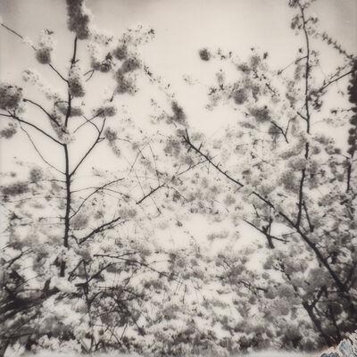 Julia Beyer, 'Cherry Blossom Skies IV', 2015