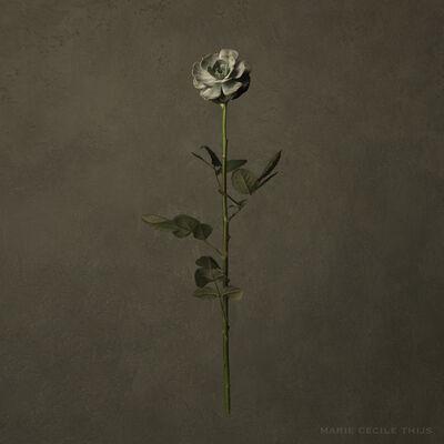 Marie Cecile Thijs, 'Desert Rose', 2019