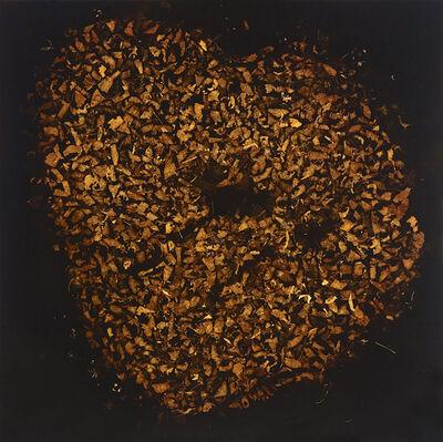 Mayme Kratz, 'Heart of Tree #2'