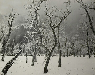 Ansel Adams, 'Trees in Snow, Yosemite National Park', 1960