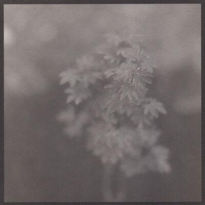 Denise Oehl, 'Japanese Maple', 2018