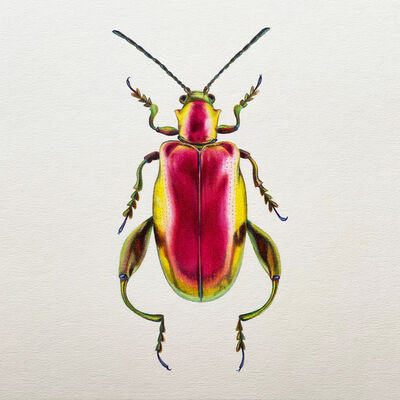 Hannah Hanlon, 'Coleoptera Chroma #16', 2020
