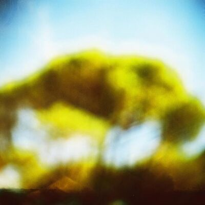Ziad Antar, 'Pine Trees', 2015