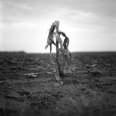 Brandon Thibodeaux, 'Corn Stalk, Bo Bo,Mississippi', 2012