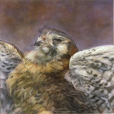 Kate Breakey, 'Falco sparverius, American Kestral', 1999