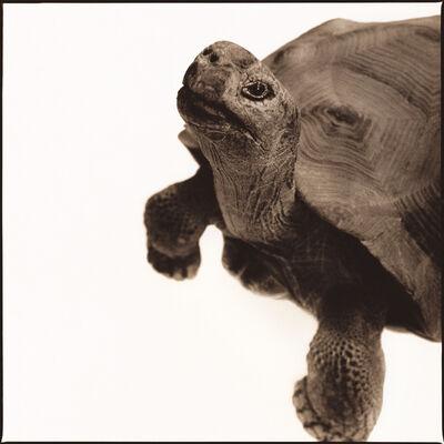 Nine Francois, 'Tortoise I'