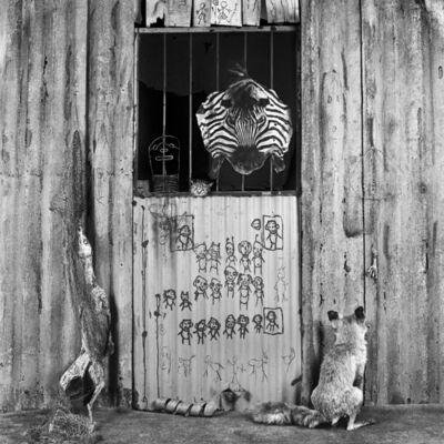 Roger Ballen, 'Zebra room', 2007