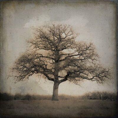 Kate Breakey, 'Live Oak II, Spring, Plum Creek, Texas'