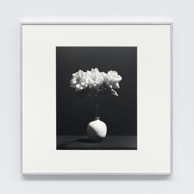 Robert Mapplethorpe, 'Rose', 1983