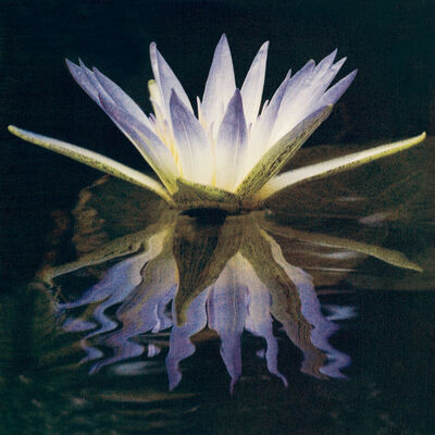Cy DeCosse, 'Blue Lotus Of The Nile'