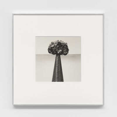 Robert Mapplethorpe, 'Carnations', 1984