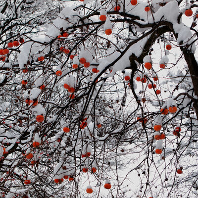 Hiroshi Watanabe, 'The Day The Dam Collapses  #25 (Persimmons)', 2009