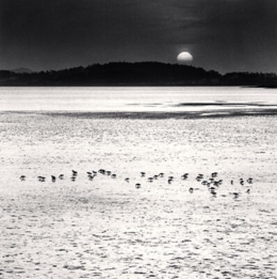 Michael Kenna, 'Feeding Birds, Jeung-do, Shinan, South Korea', 2012