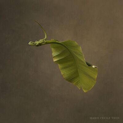 Marie Cecile Thijs, 'Leaf & Lizard', 2020